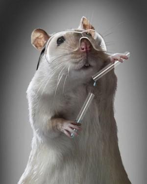raton-de-laboratorio